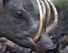 5 loài vật có hàm răng đáng sợ nhất hành tinh