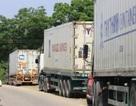 Hơn 40.000 đồng/kg ớt, container nối nhau xuất bán sang Trung Quốc