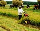 Đề xuất siêu dự án sông Hồng: Cuộc sống 20 triệu dân bị ảnh hưởng!