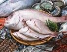 Khẩn cấp lấy mẫu gần 4.000 tấn hải sản tồn kho tại miền Trung