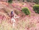 """Đồi cỏ hồng ở Đà Lạt đẹp như tranh sẽ khiến bạn """"mê mẩn"""""""