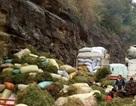 Rộ tin đồn người dân ồ ạt đào thông đất bán cho thương lái Trung Quốc