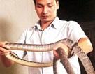 Tuổi chuột nuôi rắn kiếm tiền tỷ