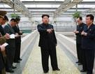 """""""Ông Kim Jong-un đang dọn dẹp đế chế của người chú rể"""""""