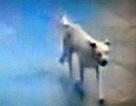 Hơn 2.000 người Bắc Kinh bị chó hoang tấn công chỉ trong 3 ngày