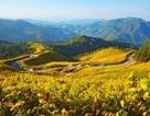 Tháng 10, trên những cung đường hoa dã quỳ đẹp nao lòng ở Đà Lạt