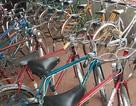 Lọt vào kho xe đạp Peugeot cổ giữa Hà Thành