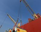 Tôn Việt vào thị trường Hòa Kỳ: Bước đột phá trong hoạt động xuất khẩu