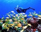 Hé lộ đời sống sinh vật biển dưới lòng đại dương