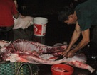 """Thực phẩm bẩn - người dân đang bị """"đầu độc"""" bởi sự vô cảm của các cơ quan quản lý? (Kỳ 2): """"Thủ phủ"""" thịt lợn chết"""