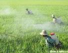 Việt Nam đang tự đầu độc chính mình