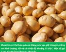 Tuyệt chiêu kéo dài thời gian bảo quản các loại rau-củ-quả lên gấp đôi
