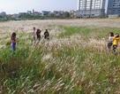 Bãi cỏ đẹp như tranh vẽ mới xuất hiện ở Hà Nội