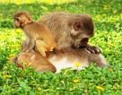 """Năm Thân kể chuyện khỉ trên đảo """"Sơn hầu vương"""""""