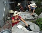 Muỗi vằn nuôi ở Nha Trang áp chế được Zika?