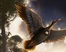 Lần đầu tiên phát hiện hóa thạch chim cổ thời Đại Trung sinh