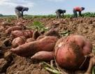 Nghiên cứu mối liên hệ giữa biến đổi khí hậu và nhu cầu lương thực