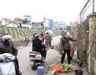 Người dân Hà Nội mua đào chơi Tết Dương lịch