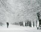 Bị lạnh có thể khiến bạn ốm?