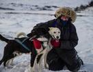 Bán nhà lên sống ở... Bắc Cực vì quá yêu chó