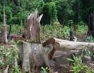 Phó Thủ tướng yêu cầu Bộ Công an điều tra vụ giết 3 bảo vệ rừng