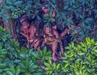 Những hình ảnh hiếm về bộ lạc nguyên thủy trong vùng rừng Amazon