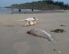 Hàng vạn hộ dân Quảng Bình nguy cơ thiếu đói do cá chết hàng loạt