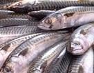 Huế: Tồn kho gần 500 tấn cá biển, doanh nghiệp kêu cứu