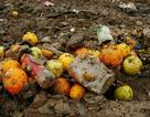 Giải pháp nào để hạn chế lãng phí thực phẩm?