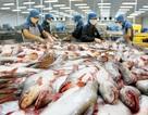 """Mỹ hủy bỏ chương trình giám sát cá da trơn: """"Cuộc chiến"""" cá tra đã kết thúc?"""