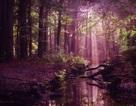 Chiêm ngưỡng vẻ đẹp kỳ ảo của những cánh rừng Hà Lan