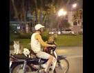 Clip chở mèo dạo phố bằng xe máy tại Việt Nam lên tin chuyện lạ báo nước ngoài