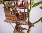 """Ấn tượng với những căn nhà mini được """"trồng'' cùng cây cảnh"""