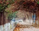 6 địa điểm chụp ảnh dã ngoại ở Hà Nội đẹp nhất mùa chớm đông