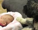 Clip vui: Chó đưa nôi dỗ em bé