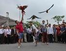 Lễ hội sinh vật cảnh lớn nhất Việt Nam tại Vinhomes Riverside