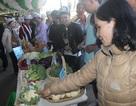 Gian hàng đối chứng rau Đà Lạt với Trung Quốc thu hút các bà nội chợ