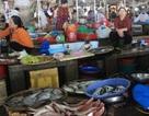 Bộ Y tế khuyến cáo không sử dụng một số hải sản miền Trung