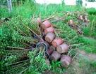 Hoa tết không kết nụ, nông dân xót xa vứt bỏ hàng nghìn chậu