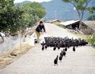 Tiên Yên: Chuyển biến mạnh trong giảm nghèo đa chiều