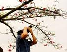 Yêu lắm mùa hoa Gạo tháng Ba