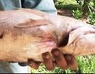 Mong bán được cá lạ nghi cá sủ vàng để có tiền trị bệnh cho con