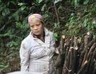 Voi rừng tấn công người và giết hại trâu, bò tại Sơn La