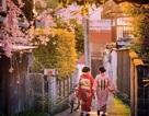 Khám phá cung đường vàng Nhật Bản cùng Vietrantour