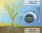 Cải thiện hiệu suất cây trồng bằng công nghệ sinh học mới