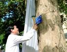Trường ĐH Kinh tế Quốc dân khánh thành hệ thống gắn biển cây xanh