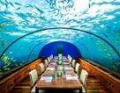 Khám phá đại dương từ những nhà hàng dưới nước độc đáo