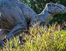 Khủng long đã sống trong đau đớn vì bệnh… viêm khớp