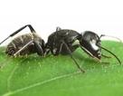 Kinh ngạc với bộ não của côn trùng