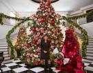 Gia đình cô Kim chi mạnh tiền mua cây thông Noel